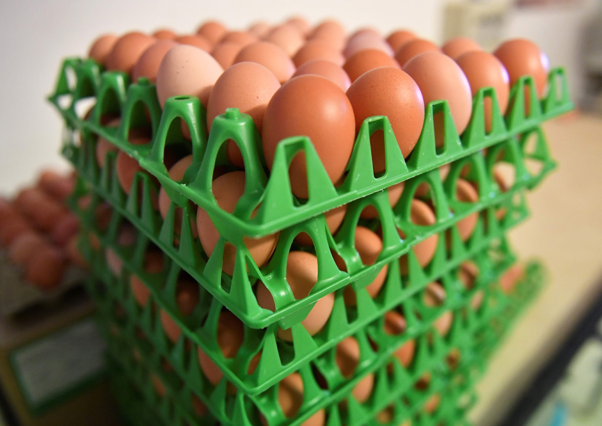 Tainted eggs scandal reaches Italy