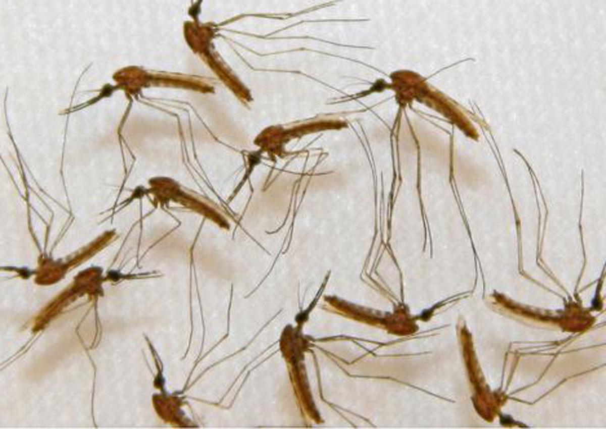 'Super malaria' spreading through SE Asia, poses global threat