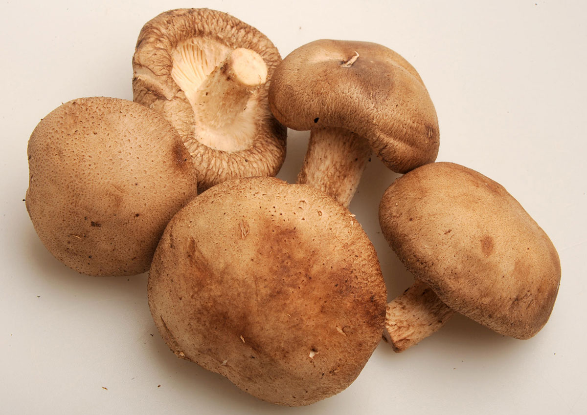 Eating mushroom helps weight loss, study says