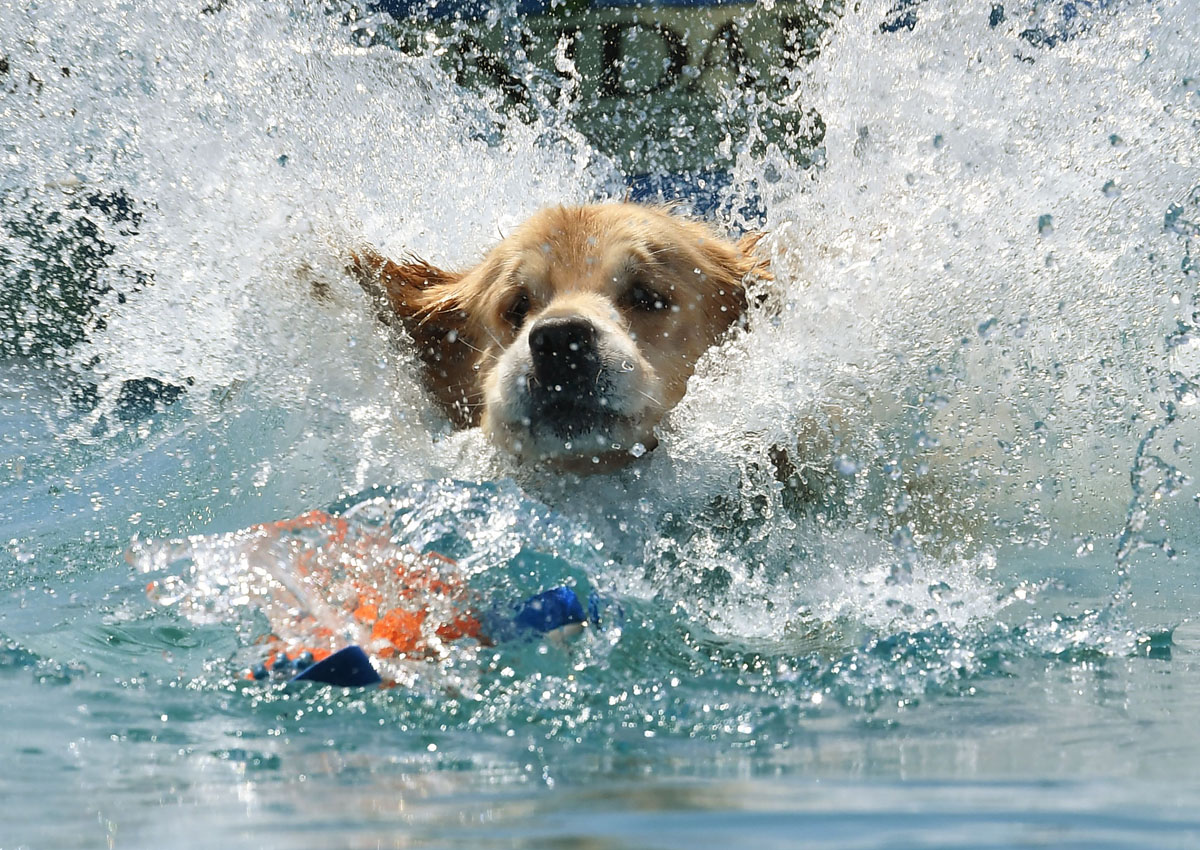 Dogs born in summer prone to heart disease: Study