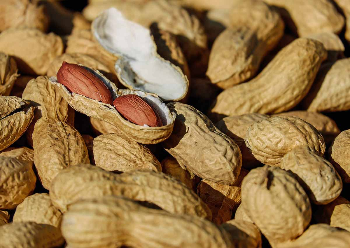 Scientists devise new, more accurate peanut allergy test